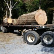 Hauling the Camp Wright Tree